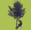 Tree surgeon, Removal, Pruning, Reduction, Care, Planting services | Stump grinding, Hedge trimming,